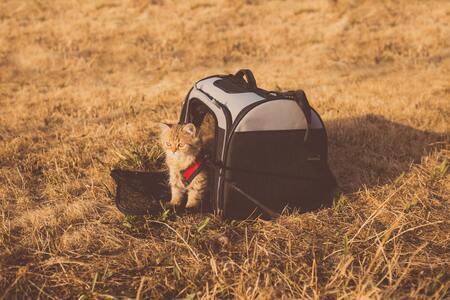 reismand kat