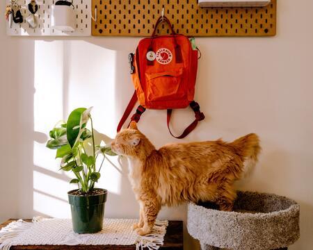 vervoersmand kat