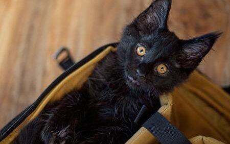 katten reismand